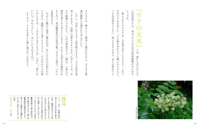 img_design_sango_hanaryori_honmomn5
